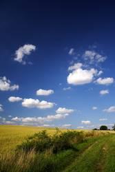 Ein Weg am Kornfeld