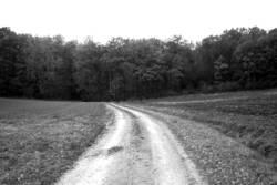 Weg zum Wald