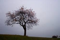 Baum (Herbstversion)
