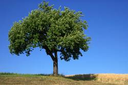 Baum (Sommerversion)