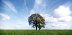 Baum vor Wolken