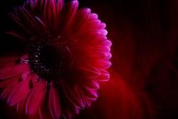 die Seele der Blume
