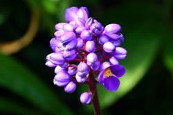 Velvet Flower