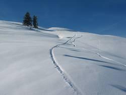 Into the snow pandemonium