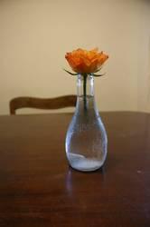 Vasenblümchen
