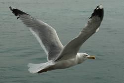 Frei-Flug
