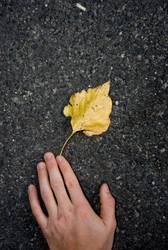 Der Herbst, zum Greifen nahe.
