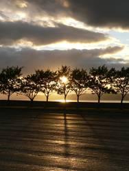 Sonnenuntergang hinter der Baumreihe
