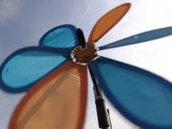 Wind-Blume