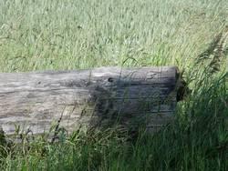 Schatten auf Holz