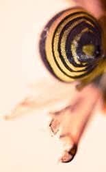 infinita vespa
