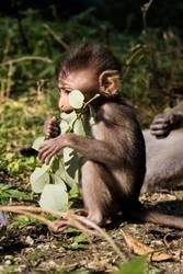 Affenbaby lässt es sich gut gehen