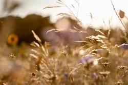 Wilde Blumen und Gräser im goldenen Herbst