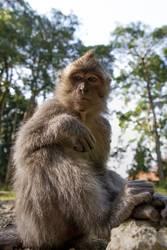 Was willst du? - Affe beobachtet und wartet ab