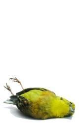 Toter Vogel 2