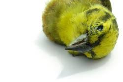 Toter Vogel 3