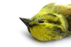 Toter Vogel 4