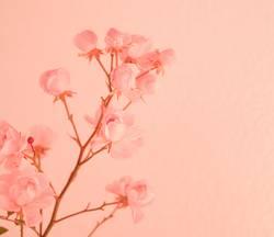 sanftes rosa