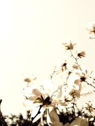 Blüten zum Gedicht