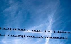 Sontags Tauben - Himmels Zuschauer