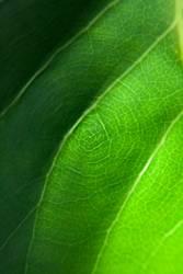 Grüne Topologie