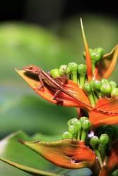 Blütenkleber