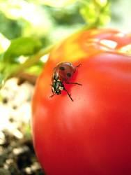 Kribbelkrabbelkäfer