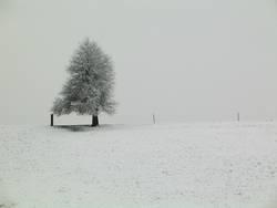 einsamer Winterbaum