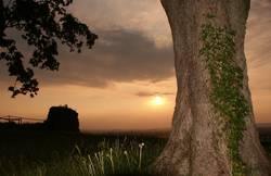 Sonnenuntergang neben Baum