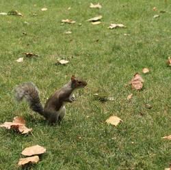 Tote Blätter und ein neugieriges Eichhörnchen.