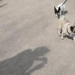 doggy style.