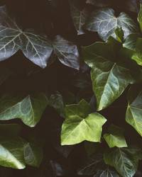 was grünes.