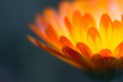 Blütenfeuer