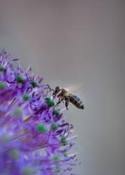 Bienchen und Sternchen