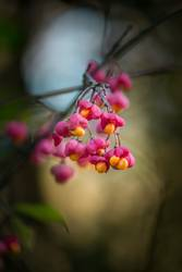 leuchtende Früchte