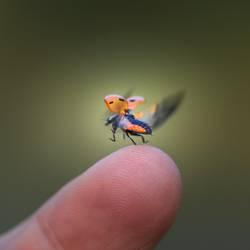 Geschwindigkeit | Flügelschlag