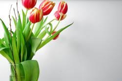 5 tulpen