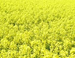 alles-gelb