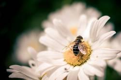 Morgen gibt's Honigbrot