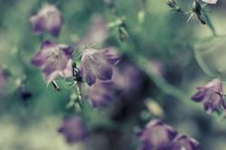 Blumenglocke