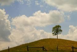 Baum in Feld auf Hügel
