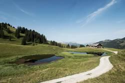 Alphütte im Saanenland