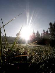 Morgensonne3