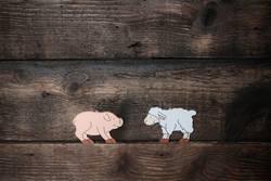 schwein und schaf