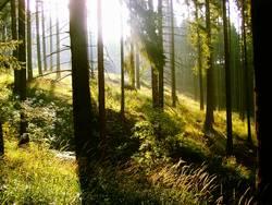 Ein Morgen im Wald