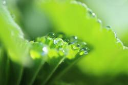 green droplets I