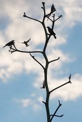 Vögel und Baumsilhouette, Namibia