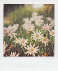 Der Frühling kann kommen...