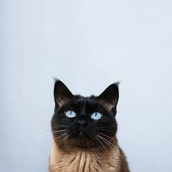 Katze mit Textfreiraum