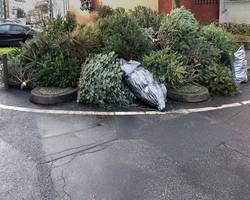 weggeworfene Tannenbäume am Straßenrand